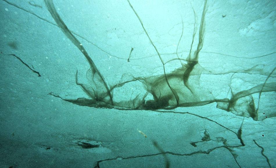 Algen und Bakterien bilden Dünger im Arktischen Ozean