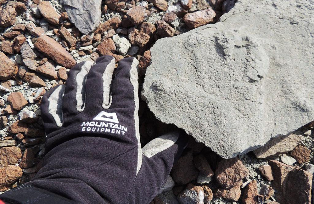 Dinosaur footprint discovered in Antarctica