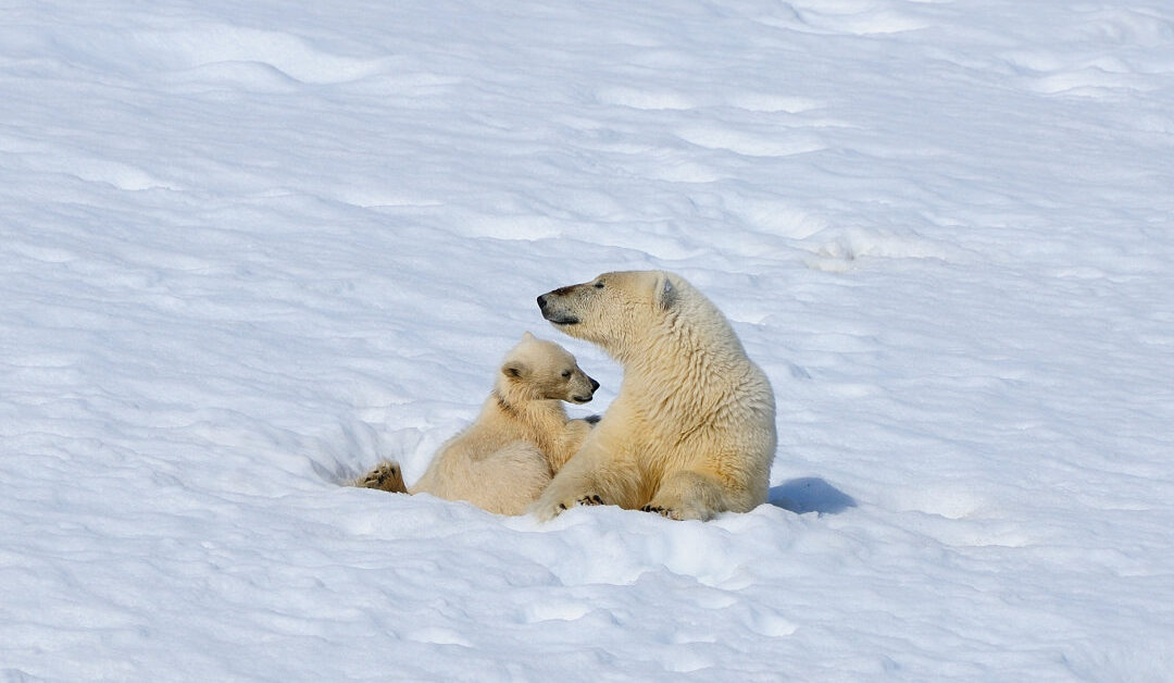 Mann vor kanadischem Gericht wegen Jagd auf Eisbären