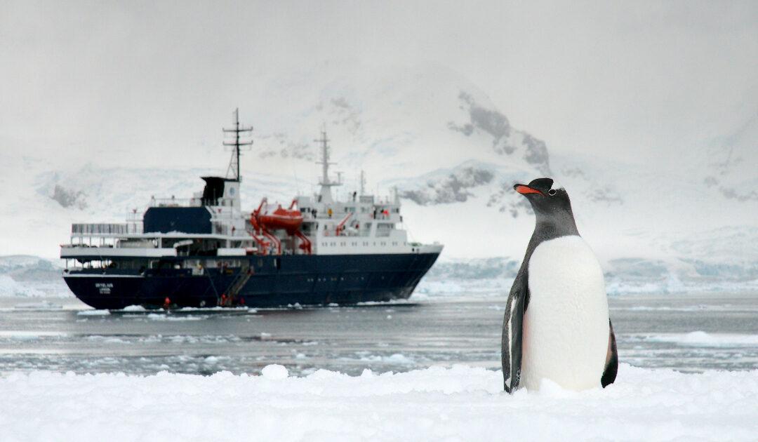 Eselspinguine leben stressarm mit Touristen in der Antarktis