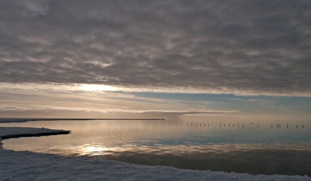 Kanada investiert in neues arktisches Meeresschutzgebiet