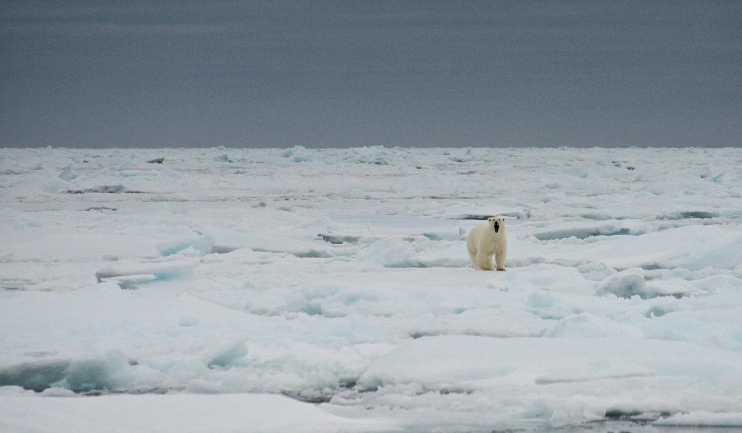 Quo vadis, Arktisches Eis?