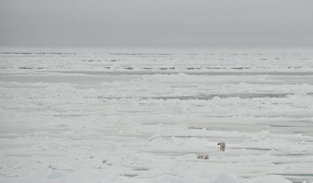 Arktisches Meereis schmilzt sich auf Platz 2 der Ausdehnungsliste