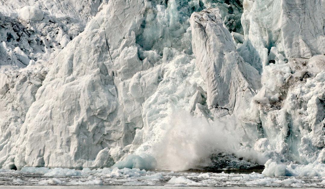 Ringelrobben helfen Wissenschaftlern bei Gletscherforschung