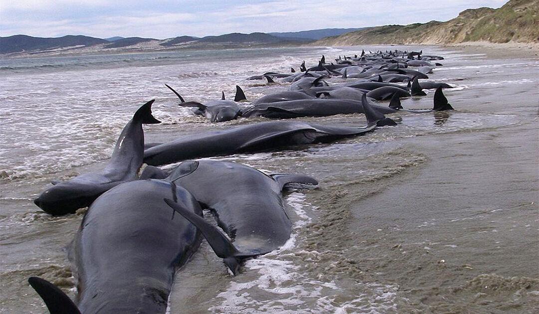 Gestrandete Wale aus dem All entdeckt