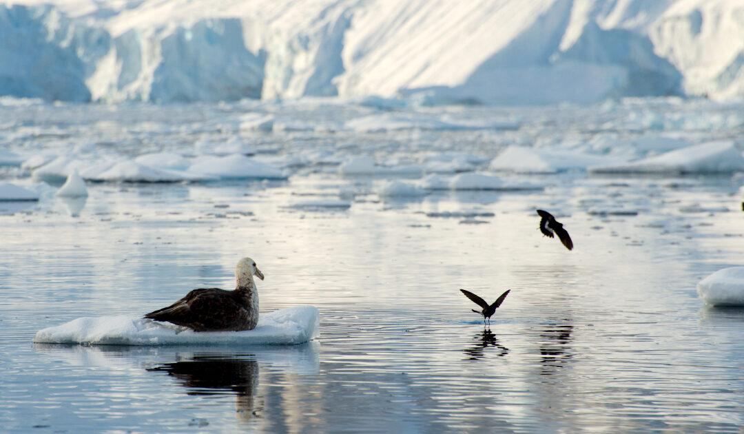 Keine Einigung über neue Meeresschutzgebiete in der Antarktis