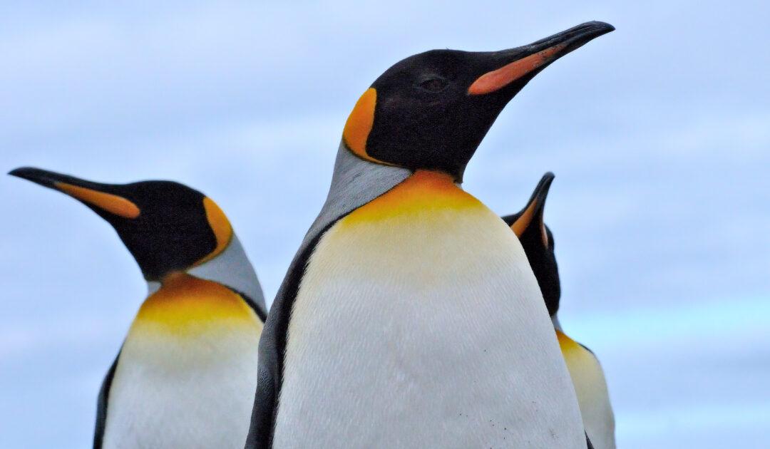 Neues Pinguin-Fossil enthüllt Geheimnisse der Pinguin-Evolution