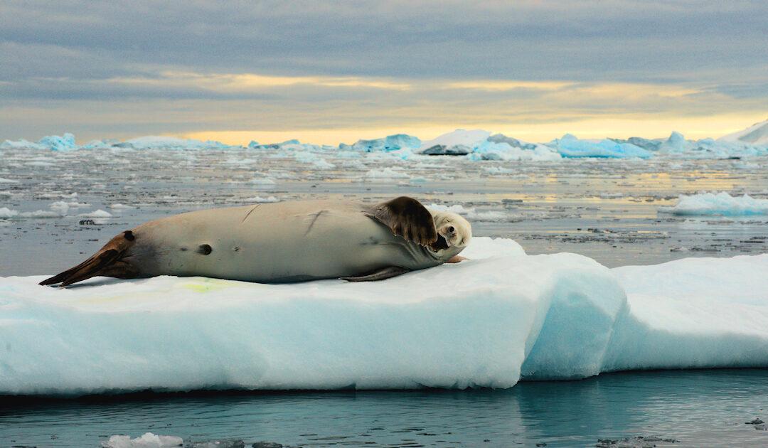 Virtuelle Polarregion lindert chronische Schmerzen