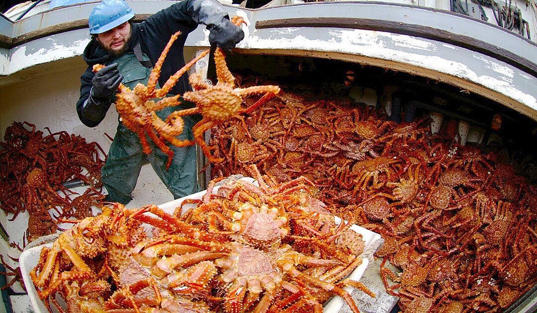 «Krabbenkrieg» zwischen Norwegen und EU bahnt sich an