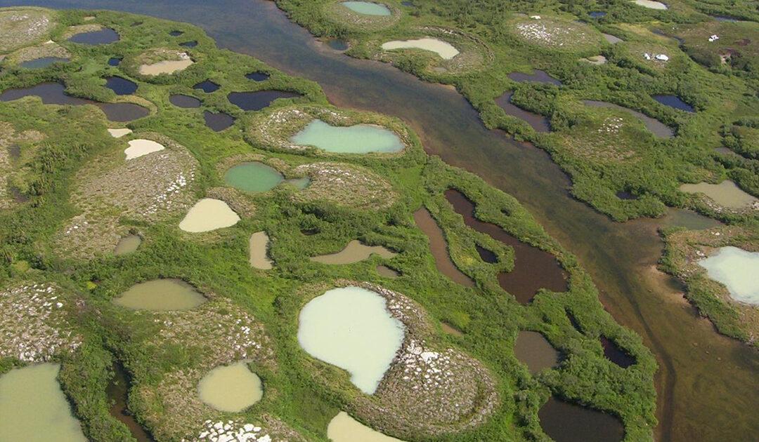 Klimawandel: Wissenschaftler warnen vor arktischen Pathogenen