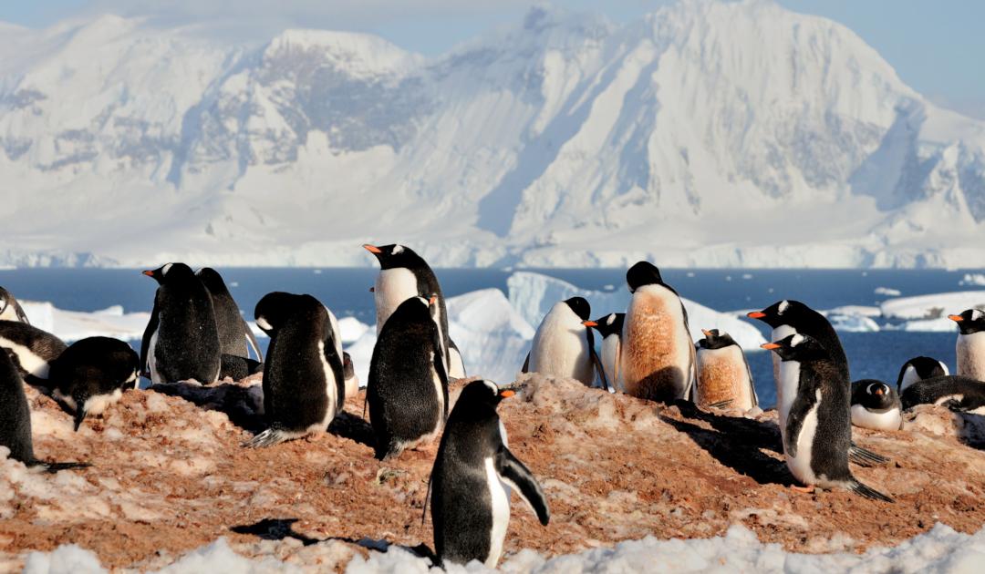 Studie listet mögliche invasive Arten in Antarktika auf