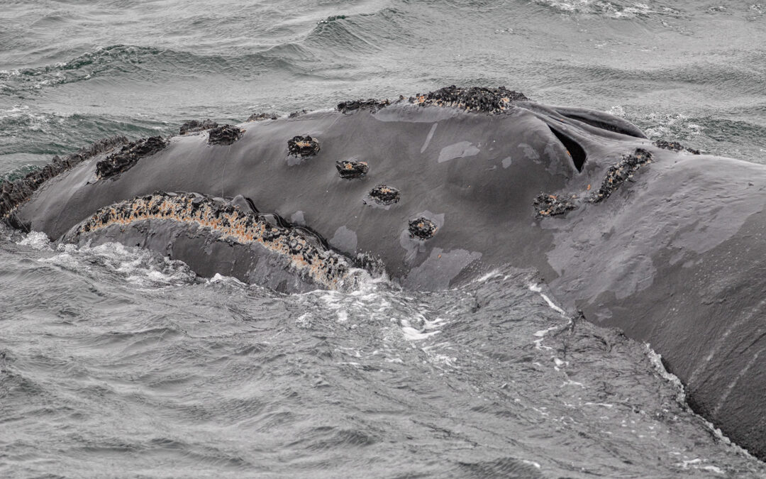Wal-Zählung aus dem All