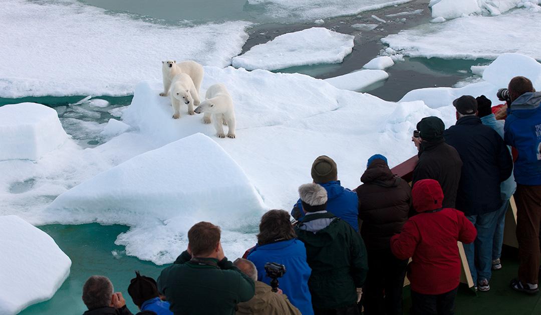 Spitzbergen – Regierung will Zertifizierung für Guides