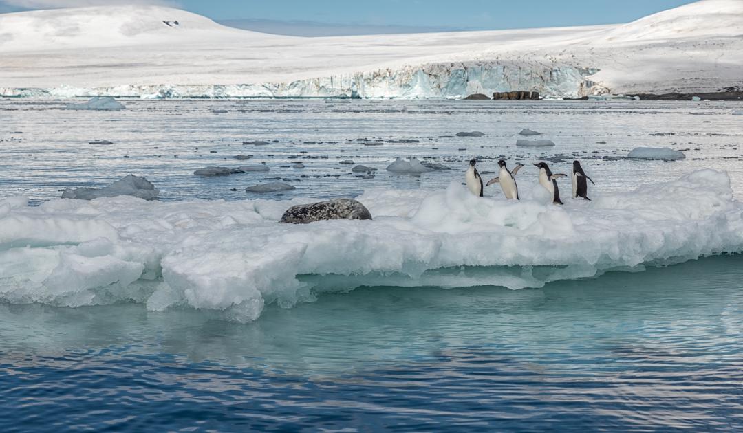Wissenschaftler besorgt über Plastik in der Antarktis
