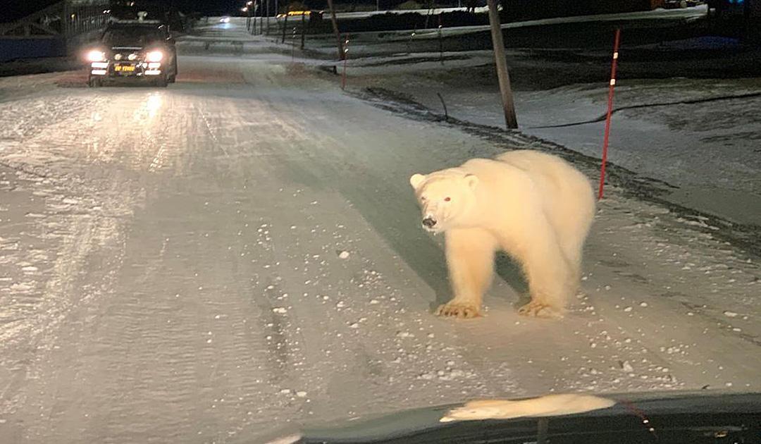 Erschossener Eisbär verursacht heftige Reaktionen