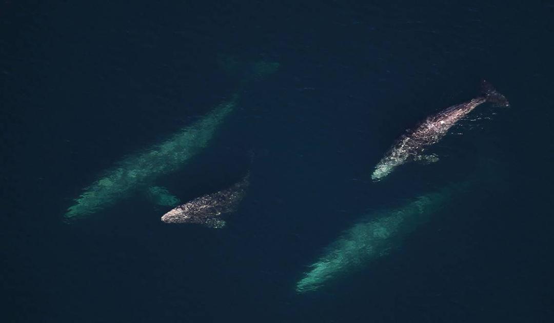 Werden Wale von Sonnenstürmen abgelenkt?