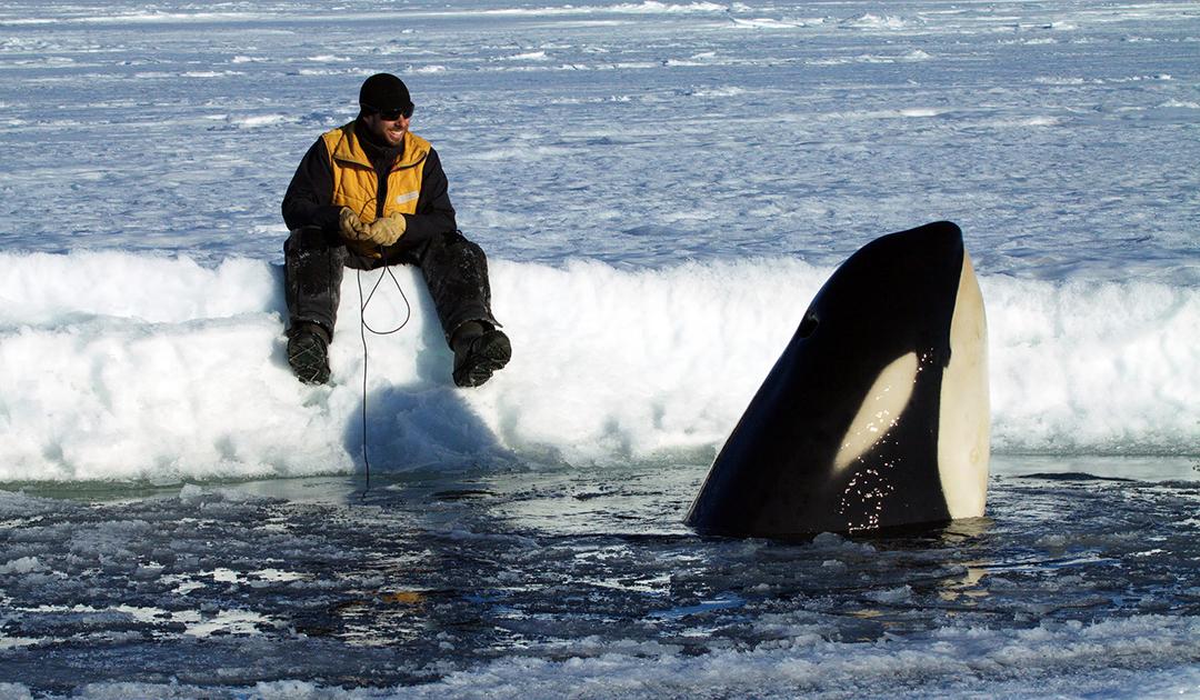Kommunikation unter Orcas im Rossmeer
