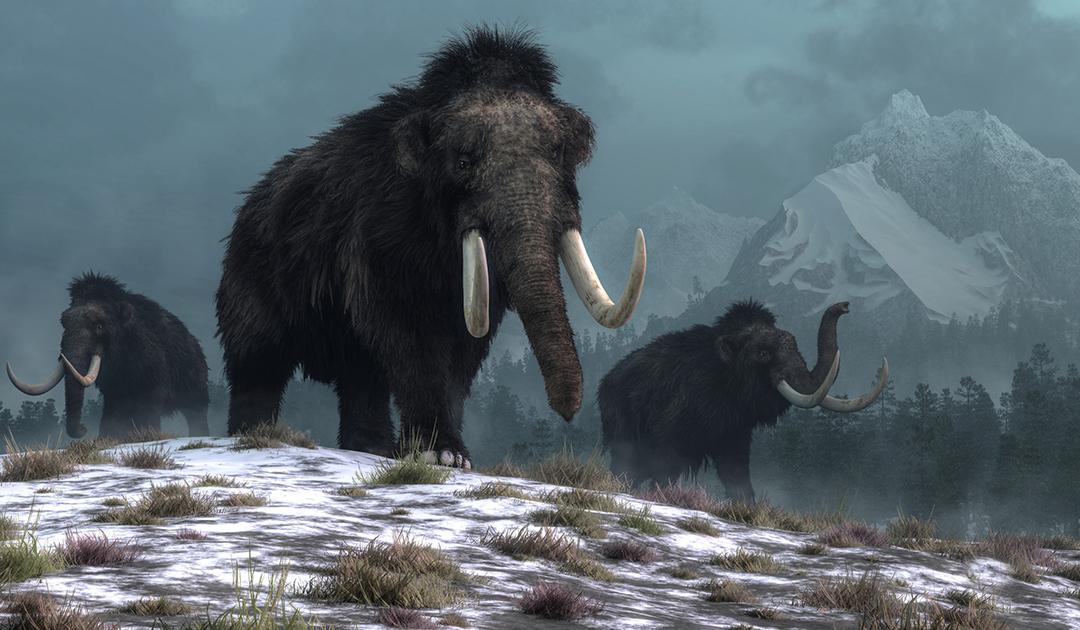 Wrangelinsel-Mammut mit Gendefekten