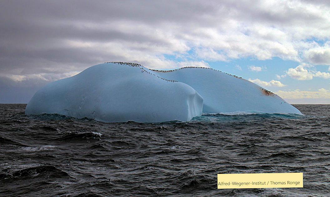 Dieses Bild hat ein leeres Alt-Attribut. Der Dateiname ist penguins-20130401_Polarstern-ANTXXIX-4_024_ThomasRonge.jpg