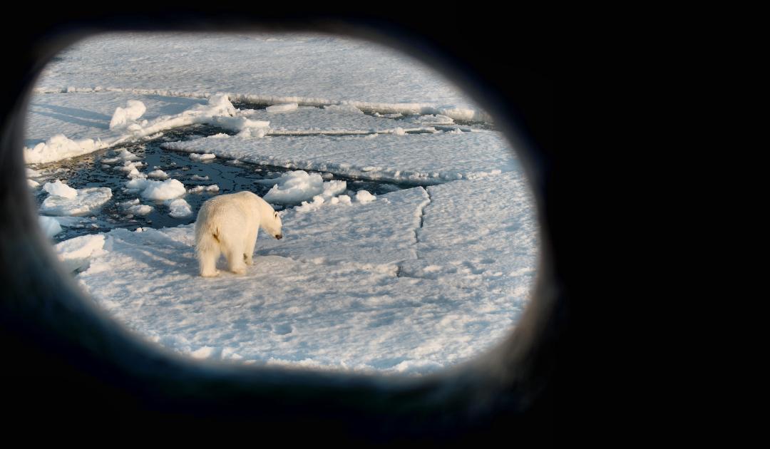 Eisbär überrascht Schiffsbesatzung mit Besuch