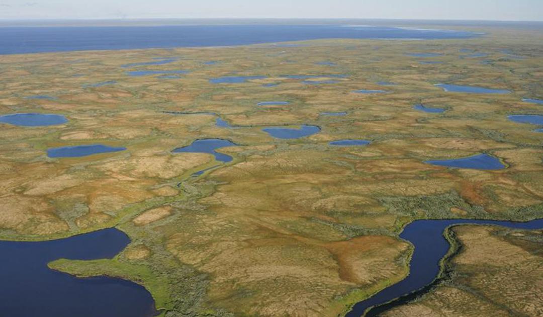 Arktische Moore nehmen bei starker Erwärmung weniger Kohlenstoff auf