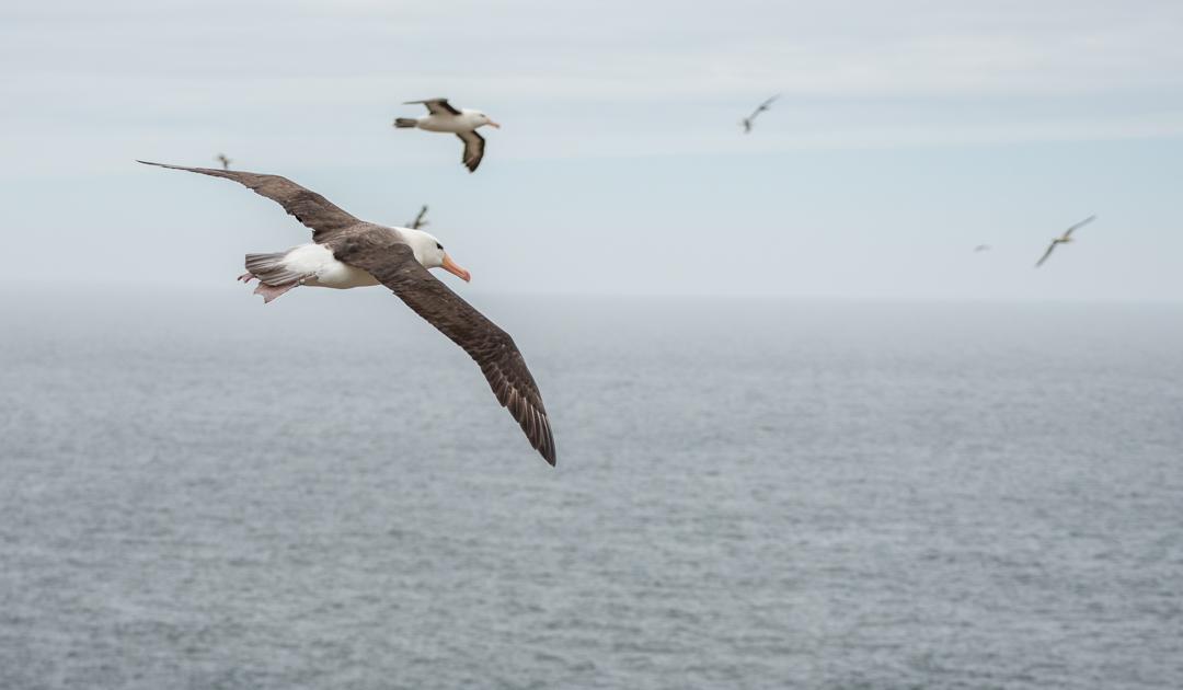Plastikmüll in der Antarktis gefährdet Seevögel