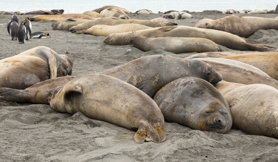 Deep-sea critters confuse elephant seals with flashes