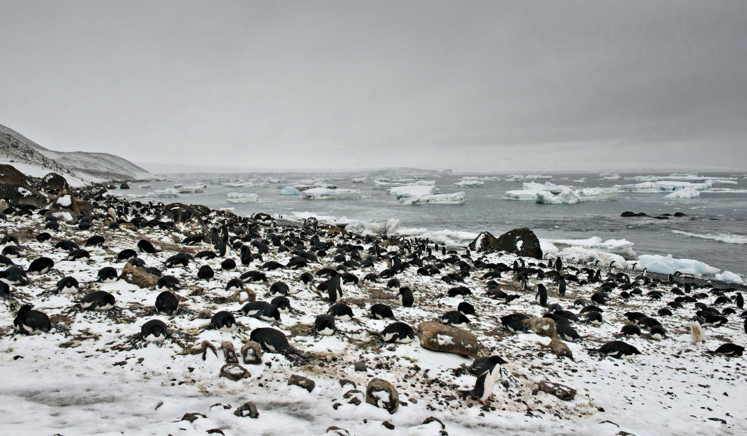 Antarktische Artenvielfalt liegt ausserhalb unberührter Wildnis