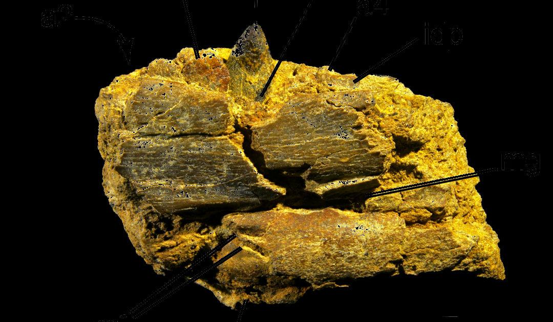 Dinosaurier lebten und brüteten einst in Alaska
