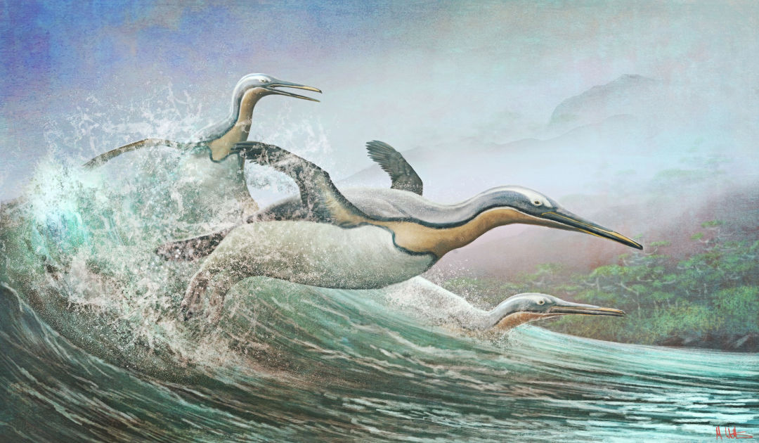Penguin-like bird lived in the northern hemisphere