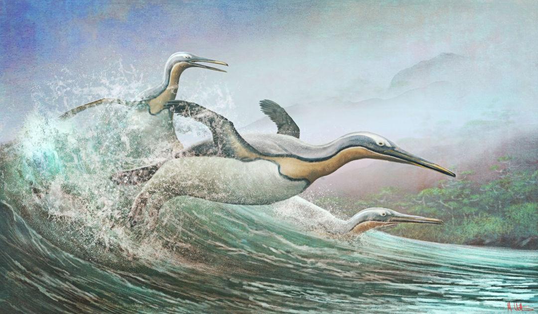 Pinguin-ähnlicher Vogel lebte auf der Nordhalbkugel