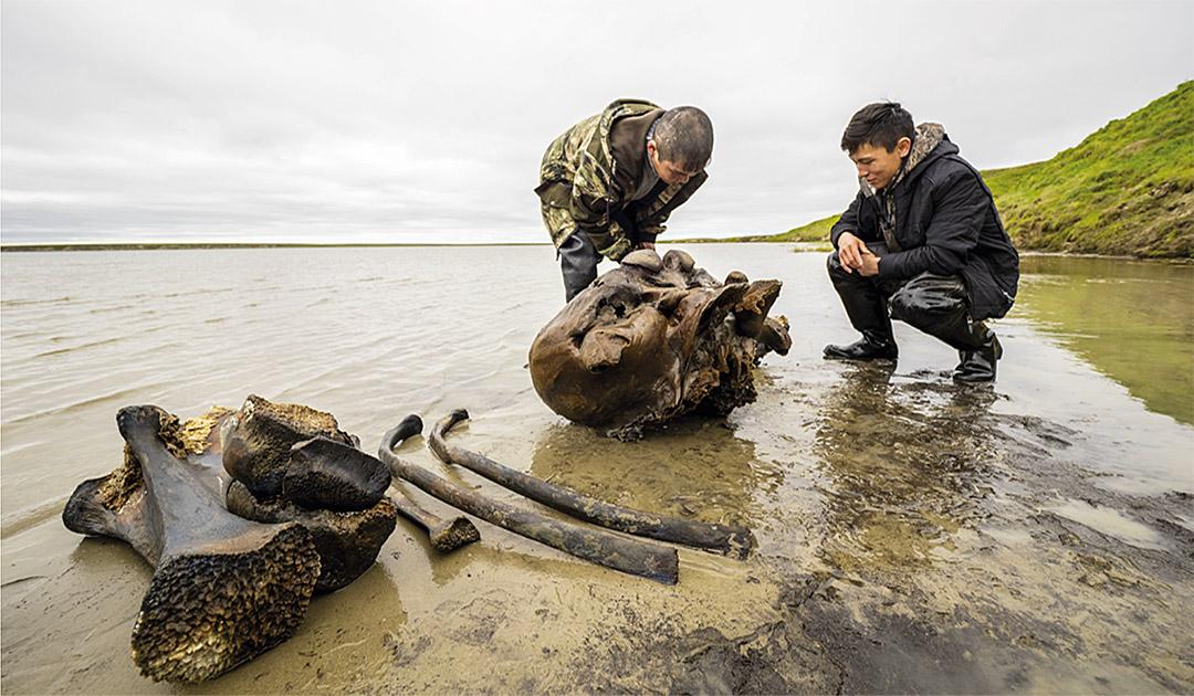Mammutskelett in sibirischem See gefunden