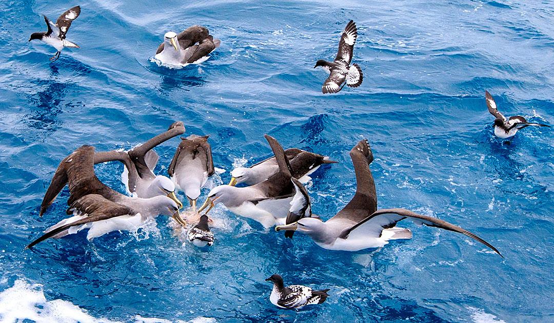 Albatrosse – Tod am Angelhaken