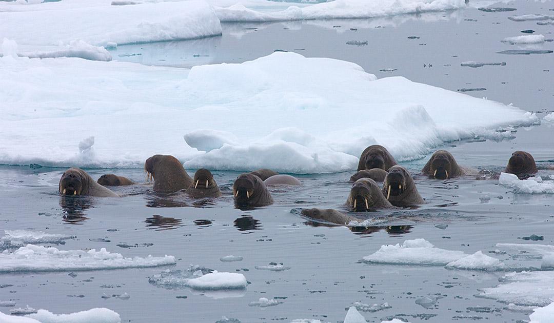 Arktisches Sommer-Eis könnte bis 2035 verschwunden sein