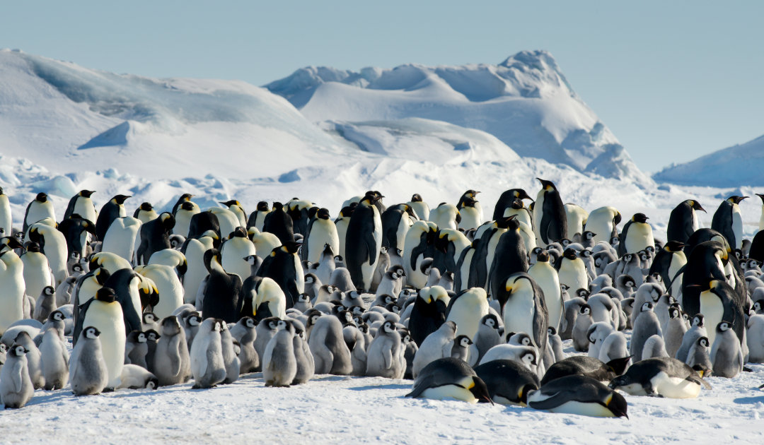 New emperor penguin colonies discovered from space
