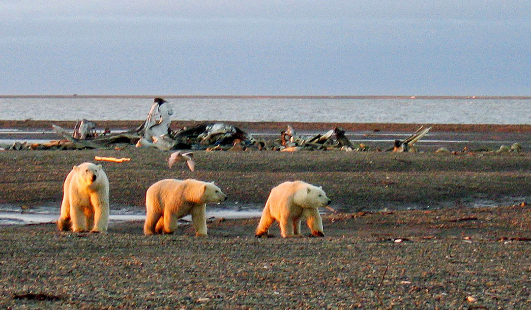 Battle for Arctic Wildlife Refuge enters crunch mode