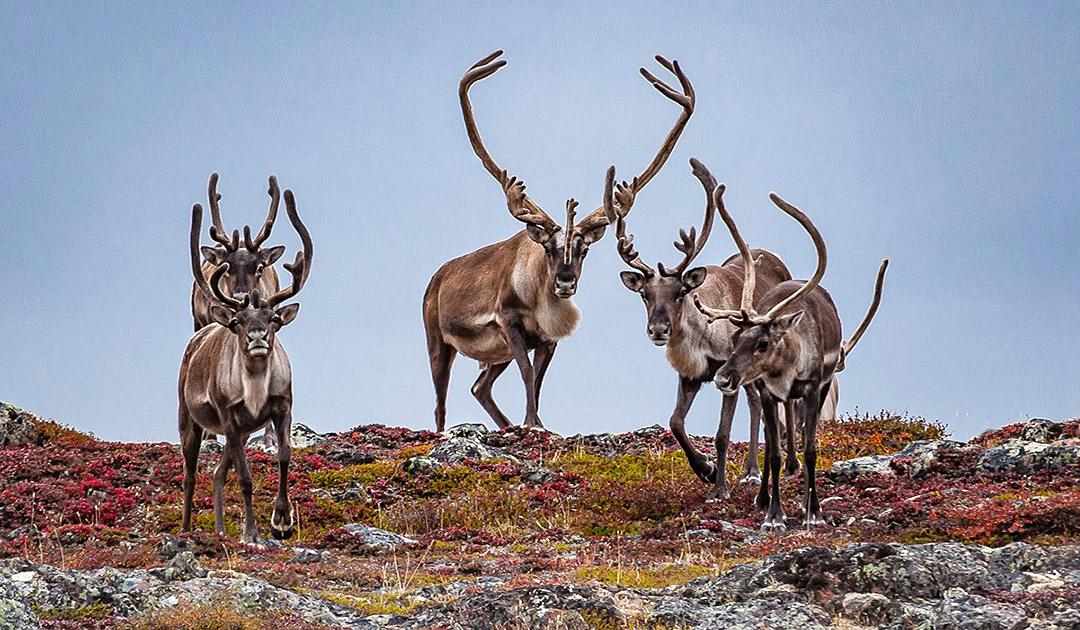 New protected area planned near Churchill