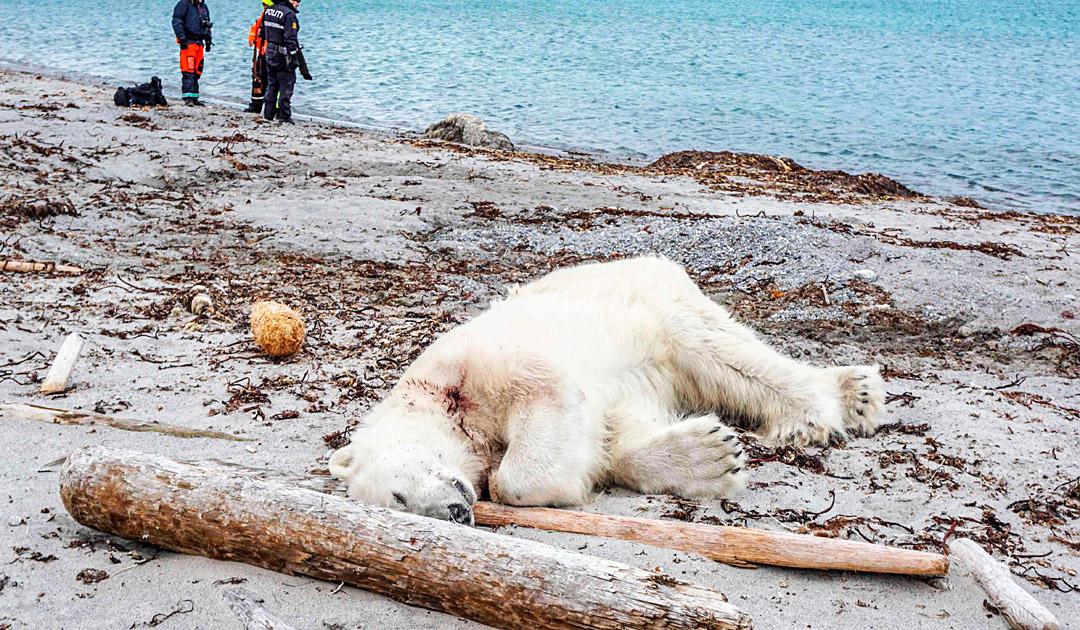 Der Eisbärenfall auf Phippsøya wurde eingestellt