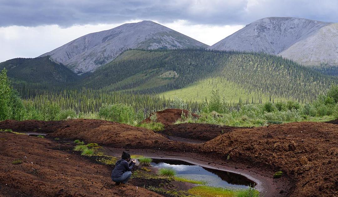 Auftauende Permafrostböden setzen Quecksilber frei