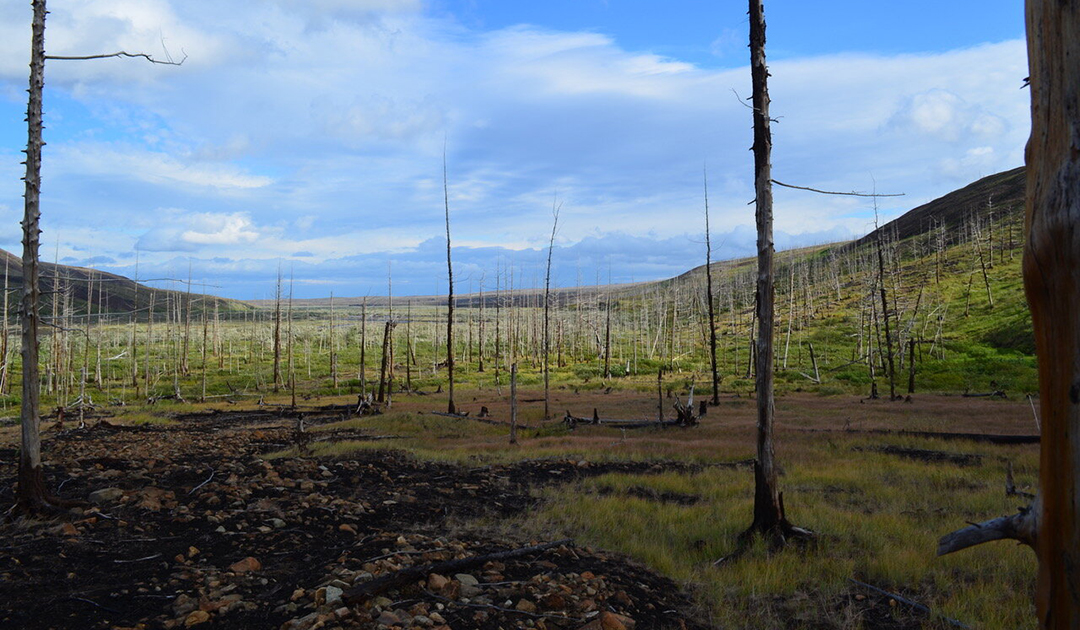 Air pollution hampers tree growth in the Arctic