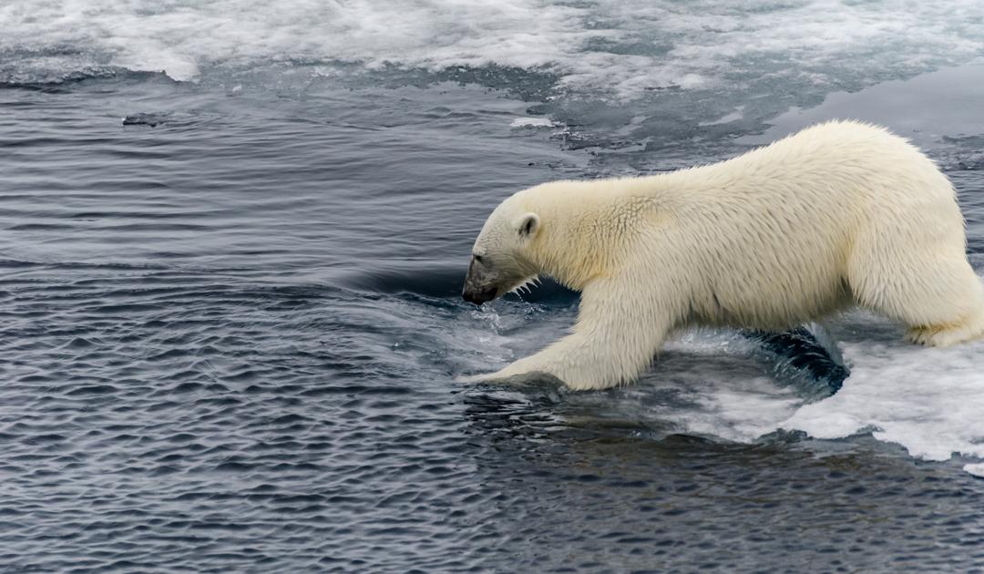 Arktis wechselt in neuen Klimazustand