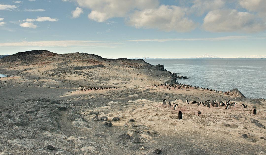 Forscher entwickeln Drohnenhilfe bei Pinguinzählung
