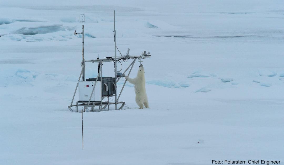 Von Schneeschlitten und Eisbären