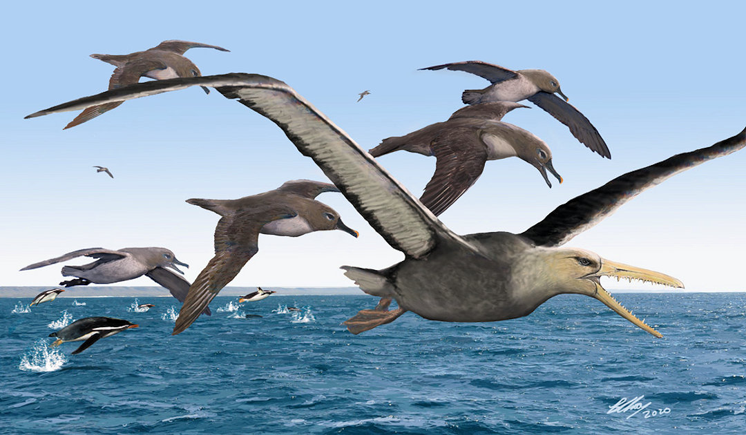 Gigantischer Flieger zog um die Antarktis