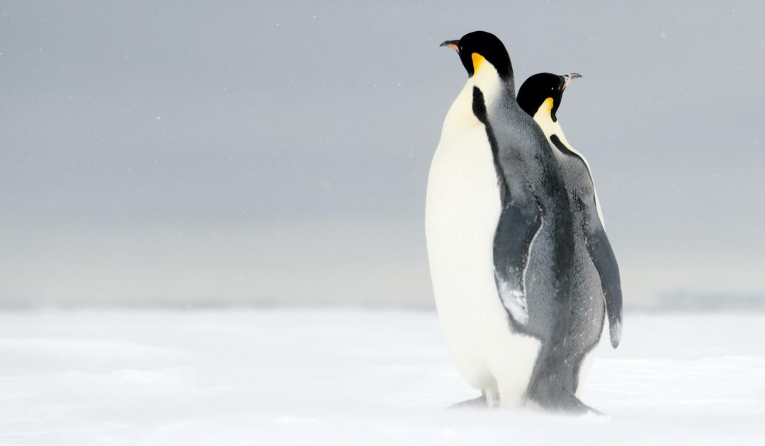 Wieder kein Schutzgebiet in Antarktika