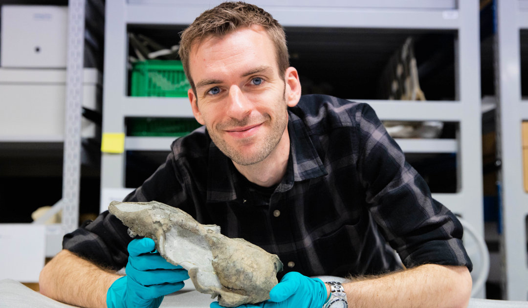 Fossiler Schädel stellt Robbenevolution auf den Kopf