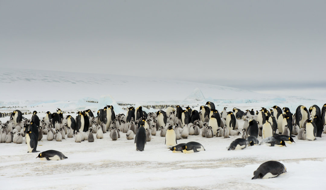 Network of protected areas improves situation of penguins