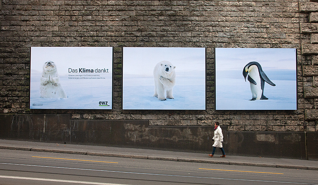 Invasion of polar bears and penguins in Zurich