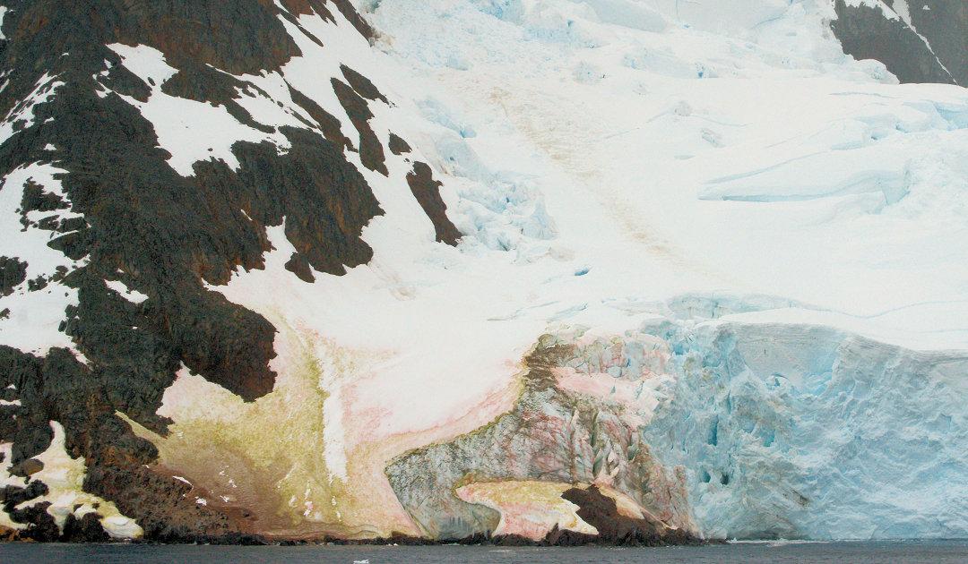 Algenblüten verstärken Schneeschmelze in der Antarktis