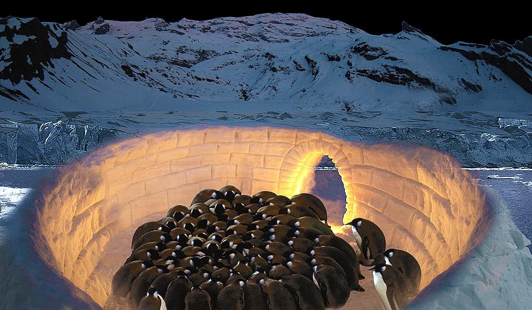 """Iglo für Pinguine? Der iranische Architekt Sajjad Navidi hat vorerst mal Pläne dazu gezeichnet und beim Wettbewerb """"Innovation für das Meer"""" den 7. Platz erreicht."""